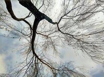 Trees och moln Arkivfoton