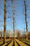 Trees och skuggar Arkivfoto