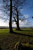 Trees och skuggar Arkivbild
