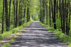 Trees och skuggar Arkivfoton