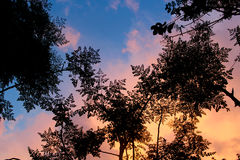 Trees och Sky Royaltyfri Fotografi