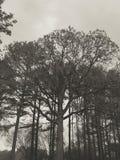 Trees och Sky Royaltyfria Foton