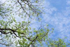 Trees och Sky Arkivbild