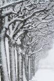 Trees och Snow Arkivfoton