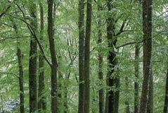 Trees och Snow Royaltyfria Foton