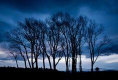 Trees och storm Fotografering för Bildbyråer