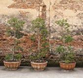 Trees och tegelstenvägg Arkivfoto
