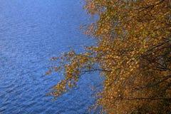 Trees och vatten Royaltyfri Bild