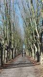 Trees. Old Belgium convent Stock Image