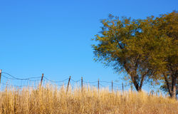 Trees and Old Wire Fence Royalty Free Stock Photography