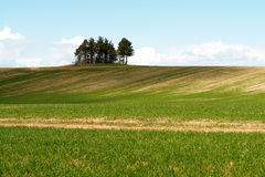 Trees On An Open Field With Sky Background Stock Photos