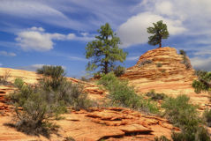 Free Trees On Slopes Of Zion-3 Stock Image - 4097031