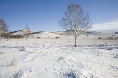 Trees On Snow Royalty Free Stock Photos