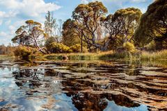 Trees on the other side. Of the river shore in the park royalty free stock photo