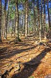 Trees of an outdoor hike through the Blue Hills Reservation royalty free stock images