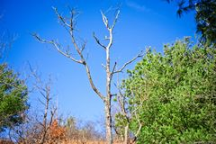 Trees of an outdoor hike on a clear day stock images