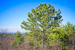 Trees of an outdoor hike on a clear day royalty free stock photos
