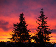 Trees outlined against sunrise Royalty Free Stock Photos