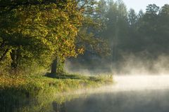 Trees over calm foggy water. Autumnal trees over calm foggy water and old building in background stock images