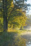 Trees over calm foggy water. Autumnal trees over calm foggy water royalty free stock photo