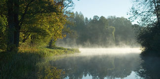 Trees over calm water at dawn. Autumnal trees over calm foggy water at dawn Stock Images