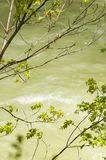 Trees Over The Cerna River. Green trees over the Cerna River at the Herculane Resort in Romania Stock Images