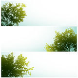 Trees over clear skies. Royalty Free Stock Images