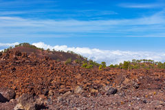 Trees over clouds at volcano Teide in Tenerife island - Canary Stock Image