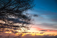 Trees over colorful cloudy sky at sunset Stock Photo