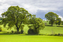 Trees over the Grass Field, Scotland royalty free stock image