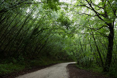 Trees over a road Royalty Free Stock Photos