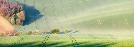 Trees over rolling hills and green fields Stock Photos