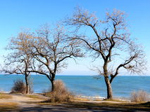 Trees over the sea Royalty Free Stock Image