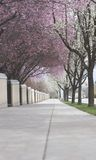 Trees over a sidewalk. Sidewalk footpath low angle view of a spring sidewalk in nature Stock Images