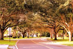 Trees over street, Florida Stock Image