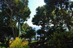 Trees overhanging beach, Monaco Royalty Free Stock Photos