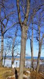 Trees overlooking a beautiful bay stock images