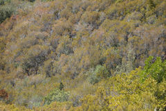 Trees på en kull Fotografering för Bildbyråer