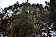 Trees på ett berg Arkivbild