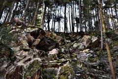 Trees på ett berg Royaltyfri Foto