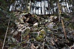 Trees på ett berg Arkivfoto