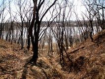 Trees på kullen Arkivbilder