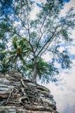 Trees på Rock royaltyfri fotografi