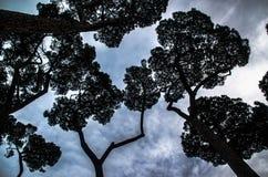 Trees på skyen royaltyfri foto