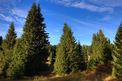 Trees, Panorama, Autumn, Horska Kvilda, Sumava, Boemerwald, Czech Republic Royalty Free Stock Photography