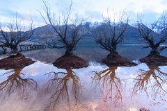 Trees in paradise, Glenorchy. Queen`s town, New Zealand Stock Photos