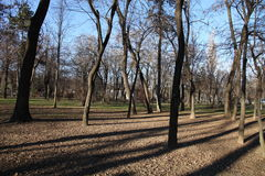 Trees in a parc. Trees in Parc Bazilescu in Bucharest in late autumn stock photo