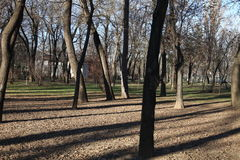 Trees in a parc. Trees in Parc Bazilescu in Bucharest in late autumn royalty free stock photos