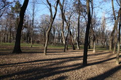 Trees in a parc. Trees in Parc Bazilescu in Bucharest in late autumn royalty free stock image