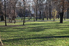 Trees in a parc. Trees in Parc Bazilescu in Bucharest in late autumn royalty free stock photography